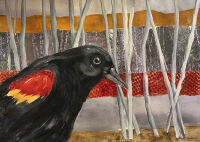 Redwing by the Woods by Becki Hesedahl