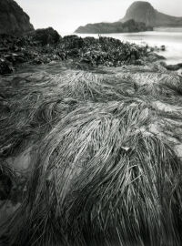 Sea Grass at Seal Rock by Rich Bergeman