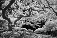 Portland Japanese Garden by Rich Bergeman