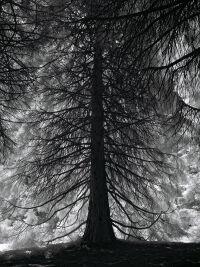 Redwood at Van Dusen Park by Rich Bergeman
