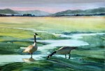Suver Geese by Richard Bunse